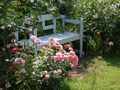 Pomponella rose - Kordes - besides the garden bench.