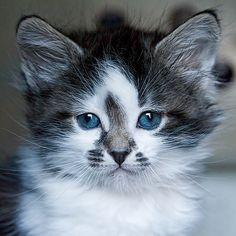 a beautiful kitten.