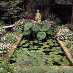 Garden pool with tall Lotus and small Nymphea (waterlilies)