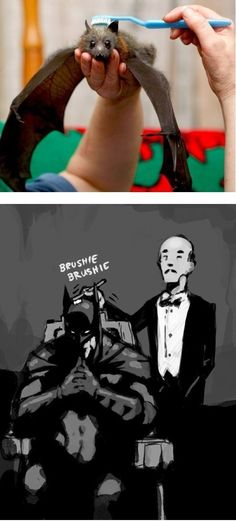 Alfred brushing Batman with a toothbrush isn't quite as cute as brushing a fruit bat with a toothbrush.