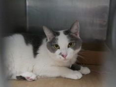 HAS A URI AND NEEDS IMMEDIATE PLACEMENT! BROOKLYN is a 5 year old neutered boy who was dumped for a
