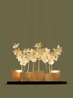 Cymbidium Orchid - Jeremy Cole