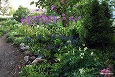 Allium, Gaudi, Lifestyle, Plants, Summer, Summer Time, Plant, Antoni Gaudi, Planets