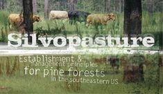 Silvopasture: Establishment and management principles for pine forests in the Southeastern United States
