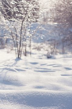 tinkling winter - please contact me if you want to buy the prints of my photos :)
