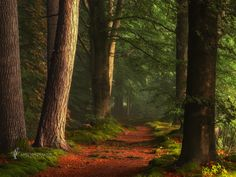 Trail path in the woods ✯ ωнιмѕу ѕαη∂у