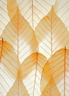 Beech Leaf--Mike Moats Books