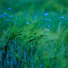 blue and green