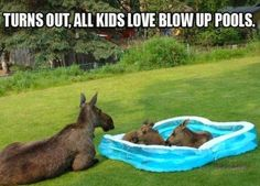 Kids love pools.