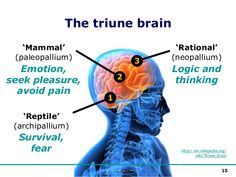 Did you know we have three brains and our unconscious instinctual brain is the reptilian brain-stem which is only concerned with survival, food, fight or flight and sex?