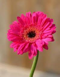 bloem roos - Google zoeken