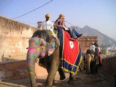Resultado de imagen de paisaje india elefantes