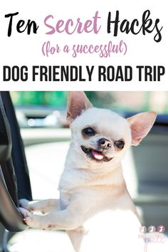10 Secret Hacks for a Successful Dog Friendly Road Trip. Learn more at IrresistiblePets.com
