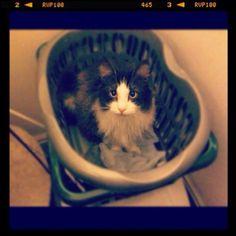 Bilbo waits for wash day