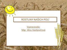 Vypracovala: Mgr. Věra Vasiljevičová Vypracovala: Mgr. Věra Vasiljevičová ROSTLINY NAŠICH POLÍ.