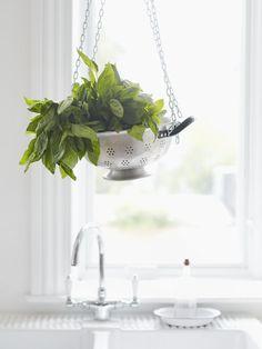 colander as herb holder