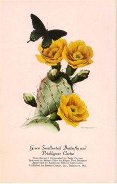 Green Swallowtail Butterfly and Pricklypear Cactus
