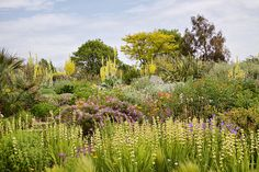 hyde hall gardens - Google Search