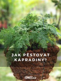 Indoor Plants, Indoor Outdoor, Pesto, Herbs, Garden, Inside Plants, Garten, Lawn And Garden, Herb