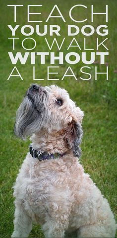 Teach your dog to walk without a leash