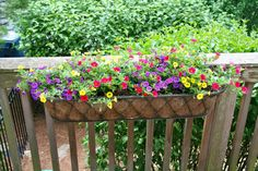 Window box ideas 5/30/12:  The railing planter on my back deck. These are growing like weeds right now. This is a mix of Superbells Blue, Superbells Scarlet, and Superbells Saffron Calibrachoa.  www.provenwinners.com