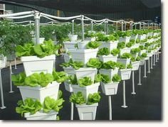 Each and every plants required nutrition and vitamins to grow better. Hydroponics is the latest way to grow plants using only water and without soil. You can say it is the revolution in farming industry.