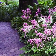Planning Your New Shade Garden   Garden ClubPartial Shade means that the area receives between three and six hours of sunlight per day. Some examples of plants that you might find in a partial shade garden include: bleeding heart, boxwood, clematis, coneflower, hydrangea