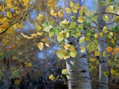 """""""Aspen Hues"""" 18 x 24 oil by Michael Godfrey Fine Art. It is a gorgeous, stunning painting of the beautiful quacking aspens."""