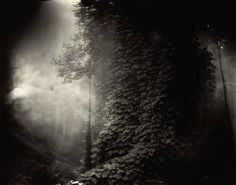 sally mann - Google 検索