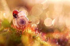 A meeting between 2 tiny creatures: A ladybug and a snail