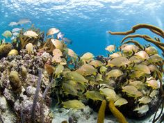 Ocean stories from the World Wildlife Fund. Belize Barrier Reef, Rest Of The World, Endangered Species, Writing Activities, Habitats, Wildlife, Coast, How To Plan, News Articles
