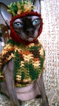 "Mason Star 2 year old Sphynx ""Most Creative Pet"" #evangers #calendar"
