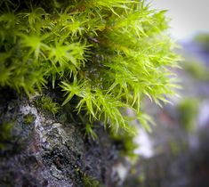 Getting very close to moss