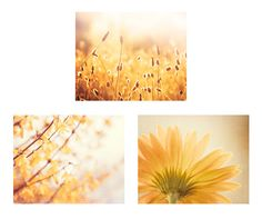 Set of Three Nature Photographs - yellow gold photography flower floral wall art spring mustard print set branches photo 11x14, 8x10, 5x7 by CarolynCochrane on Etsy https://www.etsy.com/listing/105016268/set-of-three-nature-photographs-yellow