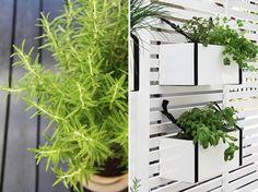 detail white planter box strapped to trellis with black nylon webbing via Gardenista