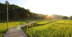 ไร่แสงอรุณ กับความทรงจำอันอบอุ่น ณ ริมน้ำโขง - เที่ยวทั่วไทยไปกับ The TripPacker