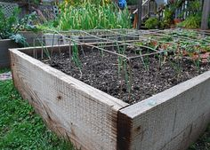 Keep cats out of raised garden beds in the off season with black