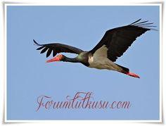 Almanca hayvan tanıtımı, Almanca hayvan tanıtımı kara leylek - ForumTutkusu.Com - Forum Tutkunlarının Tek Adresi