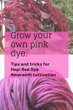 Want to grow your own dye garden? Hopi Red Dye Amaranth is a gorgeous annual that grows 4 to 6 feet tall with long, draping flower heads. It is a stunner in the garden, and gives an amazing pink dye on protein fibers! Find tips and seeds here. Fabric Yarn, How To Dye Fabric, Fabric Crafts, Natural Dye Fabric, Natural Dyeing, Natural Hair, Textile Dyeing, Dyeing Yarn, Dyeing Fabric