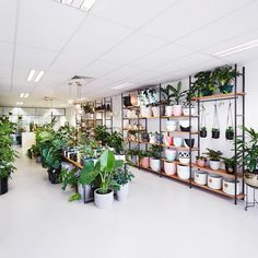 C O L O U R Explore the pops of colour throughout our green sanctuary, our store is constantly evolving so there is always something new to… Flower Shop Design, Shop Front Design, Store Design, Flower Shop Interiors, Interior Design Plants, Flower Studio, Store Fixtures, Plant Shelves, Garden Shop