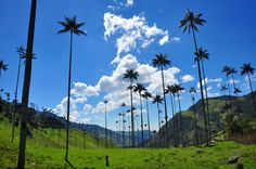 Valley de Cocora, Colombia.  200 feet tall palms!  It was a steep climb by horseback into the cloud forest.