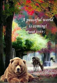 I can't wait ♡ No worrying about money, housing, politics etc. Just PEACE♡ Healing Scriptures, Bible Prayers, Bible Scriptures, Biblical Quotes, Bible Verses Quotes, Animals In The Bible, Jehovah Paradise, Life In Paradise, Bible Truth