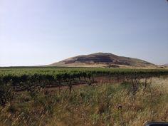 Golan Heights.