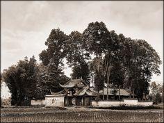 China, Kuan Hsien Temple [1908] Ernest H. Wilson