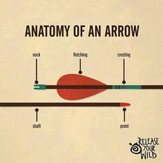 Tips for Archery Fishing
