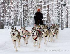 Safari de Huskys en el Círculo ártico en Rovaniemi en la Laponia en Finlandia