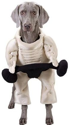 Pet Muscle Dog Halloween Costume (Size: Large) « Pet Advertisings
