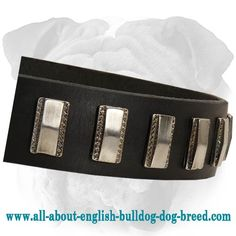 Ornament #Leather #Collar with Plates for #English #Bulldog $49.00 | www.all-about-english-bulldog-dog-breed.com