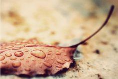 Wet dead leaf