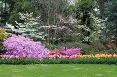 Tulips, azaleas, and dogwoods on the Lunar Lawn at Hillwood, Washington DC